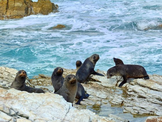 Point Kean Seal Colony