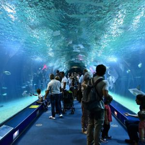 瓦伦西亚海洋水族馆旅游景点攻略图