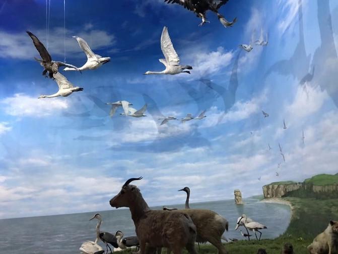 呼伦贝尔大草原 一万个人眼中有一万种呼伦贝尔大草原的秋 – 呼伦贝尔游记攻略插图69