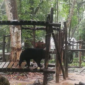 达光西熊类保护中心旅游景点攻略图