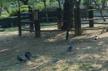日本四国松山市道后公园