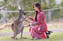 澳大利亚为数不多可以抱考拉的动物园
