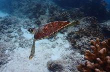 潜水胜地-斯米兰群岛
