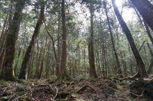 探索日本*自杀胜地-青木原树海的秘密