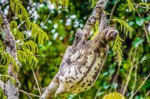 #浪漫的事# 拜访神秘而浪漫的亚马逊雨林,与神奇的动物为邻
