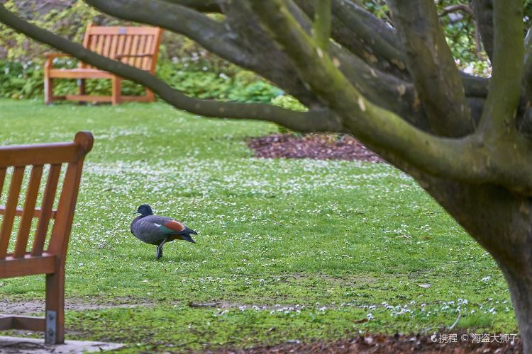 Christchurch Botanic Gardens3