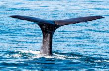 新西兰之凱庫拉賞鯨之旅