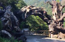 龙湾潭森林公园
