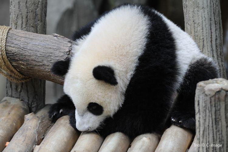 馬來西亞國家動物園3