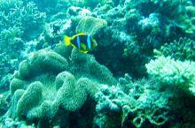 MANA岛海域潜水拍摄的照片