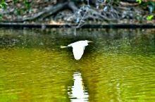 这里的大鸟自由自在的飞翔,真的很美