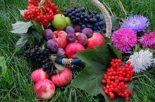 看一眼就能开心 连日来高温酷暑的北京,干啥都没情绪,看看这些漂亮的水果,你是不是能开心点呢?
