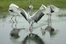 齐齐哈尔(鹤城).扎龙湿地——丹顶鹤的故乡