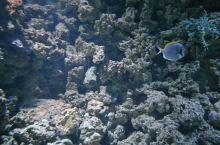 拿起你的相机,给可爱的海洋生物拍张照