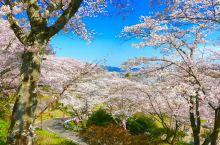 春の樱❀春光无限好,来宫城看一目千本樱