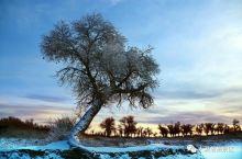 大漠胡杨景区--冬之篇!