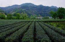 游最美乡村看茶乡实景演出 玩转中国最美乡村安康平利