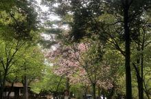 日本初体验——奈良公园看小鹿