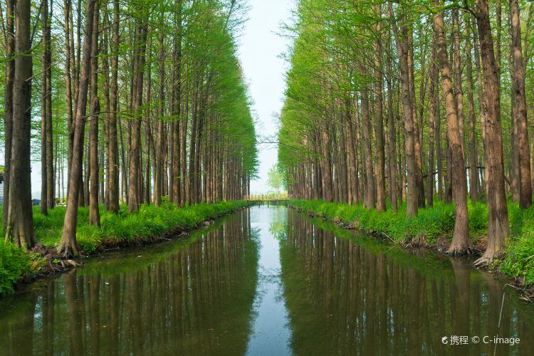 Lizhong Water Forest Park4