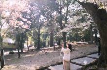 奈良公园看樱花雪