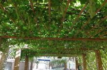 吐鲁番葡萄沟1