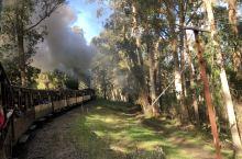 历史的火车在森林中穿梭