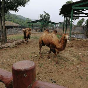 无锡动物园(太湖欢乐园)旅游景点攻略图