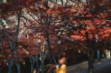 日本超火的奈良和可爱的梅花鹿们啊