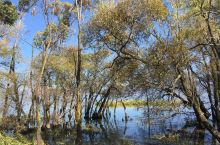 11月22日大理古城、洱海湿地公园