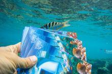 潜到海底去寄明信片,还有比这更酷的事吗?