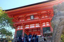 京都必打卡 | 春天赏樱秋天看枫的最美「清水寺」