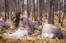 在敖鲁古雅和驯鹿一起看最美秋天