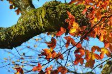 婺源的秋天那么美