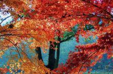 """杭州最美秋色在""""九溪"""" 杭州是我最喜欢的城市,秋天又是我最爱的季节,念着九溪的叶子也该红吧,不如躲开"""