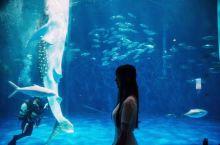 #向往的生活# 徜徉在鹿儿岛的海底世界里