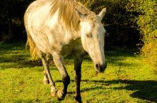 想知道西班牙的马和内蒙的马有何不同吗?跟我来!