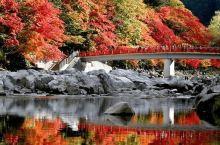 约4000棵枫树,红色、橙色、黄色层层叠叠,相互交错,映在清流的倒影堪称绝景。最好的赏枫季节是11月