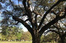 美丽的橡树庄园