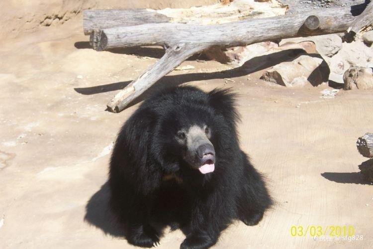 Little Rock Zoo3