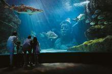 曼谷旅行太热,那就去暹罗海洋世界避暑吧,还能乘坐玻璃船看鲨鱼