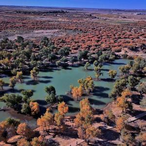 内蒙古游记图文-走进大漠胡杨林,陶醉于这个童话世界里