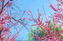竹泉村·红石寨春色手机壁纸美到炸裂,还不赶快保存!
