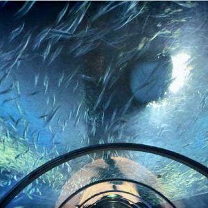 登别海洋公园尼克斯旅游景点攻略图