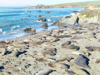 象海豹聚集區