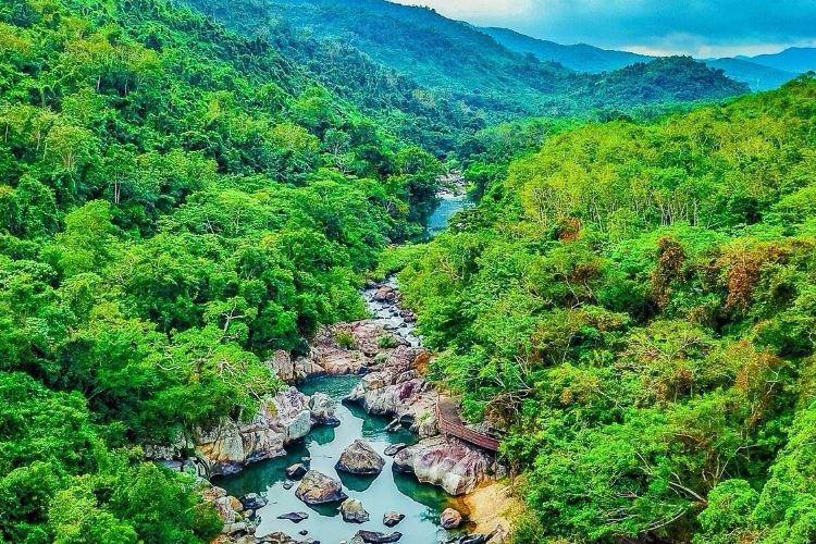 야노다 열대우림4