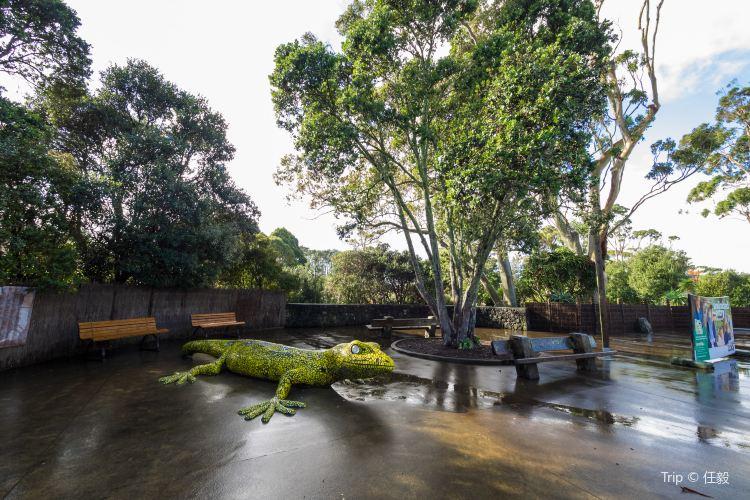 Auckland Zoo3