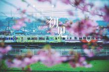 长崎。樱花,