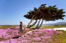 十七英里的花与海