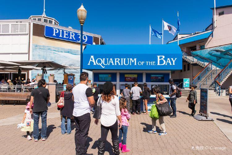 Aquarium of the Bay3