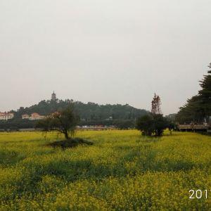 莲湖公园旅游景点攻略图